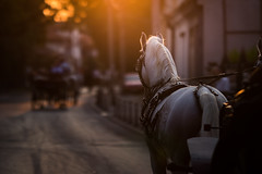White horse pulling a hackney carriage with another cab in the blurry background