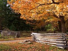 Leaves are falling, autumn is calling.... (Laura Rowan) Tags: fence autumn fall sun leaf leaves fallen sunshine yard