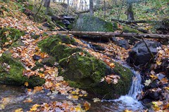 'Keep calm and enjoy the FALL vibes🍂🍁... (bo.d70) Tags: nature water falls flowing fallseason nikonphotography nikonshot autumnvibes nikond610 autumn🍂 maple🍁