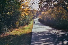 Alone (csitarydavid) Tags: road alone man walking country countryroad countryside trees leaves autumn fall colourful hungary chinon chinoncm5 zoomlens zoom 35mm 35mmfilm film analog hobby