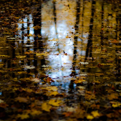 Autumn Afternoon In Woods 035 (noahbw) Tags: d5000 dof nikon ryersonwoodsforestpreserve abstract autumn blur depthoffield forest landscape leaves natural noahbw puddle reflection square trees water woods