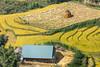_29A1692.0919.San Sả Hồ.Sapa.Lào Cai (hoanglongphoto) Tags: asia asian vietnam northvietnam northernvietnam northwestvietnam landscape scenery vietnamlandscape vietnamscenery sapalandscape terraces terracedfields harvest seasonharvest people landscapeandpeople flanksmountain terracedfieldsinvietnam canon canoneos5dsr canonef500mmf4lisiiusm tâybắc làocai sapa sansảhồ phongcảnh ruộngbậcthang phongcảnhsapa ruộngbậcthangsapa sapamùalúachín sapamùagặt lúachín mùagặt sườnnúi người phongcảnhcóngười house ngôinhà 1ngôinhà 1house