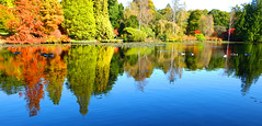 Lakes @ Sheffield Park (Adam Swaine) Tags: autumn reflections trees nationaltrust lakes seasons sussex water beautiful gardens sheffieldpark 2019 counties eastsussex adamswaine colours leaves uk countryside