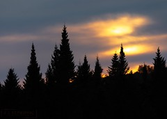 Last Light (T L Sepkovic) Tags: spruce pinetrees trees sunset sunsetglow silhouette canon5dmkiv canonusa promediagear maine