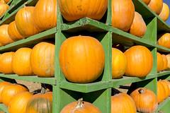 Shelves of Pumpkins (aaronrhawkins) Tags: pumpkin patch sale shelf orange green halloween collection stack organization edge display holiday october aaronhawkins
