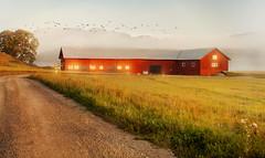 Remembering summer (Birgitta Sjostedt) Tags: barn rural landscape dirty road field grass outdoor texture filter topaz
