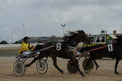 1 and 2 fighting for 1st and 2nd (1/3) (PChamaeleoMH) Tags: horses people racing judges trotting sanlluis hipodrommunicipaldemao van umpire