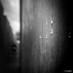 Silent Tears (Holger Glaab) Tags: berlin holocaust holocaustmahnmal travel drop waterdrop concrete bnw blackandwhite monochrome city monument fineart shallow depth field
