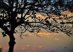Silhuetas (Ruby Augusto) Tags: silhuetas silhouettes tree árvore sunset pôrdosol nuvens clouds