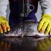 Amory Catfish