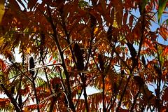 DSC_2511 (griecocathy) Tags: arbre feuille fleurs tiges ciel noir vert orange jaune bleu blanc rouge