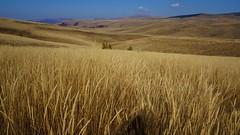 Grassland (Goran Joka) Tags: grassland grass herb vrtibog staraplanina serbia srbija nature landscape outdoor field hills autumn oldmountain dojkinci