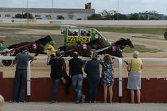 Judges scrutinising the leaders (2/2) (PChamaeleoMH) Tags: horses people racing spectators judges sanlluis hipodrommunicipaldemao van umpire trotting