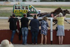 Race (auto)start (3/3) (PChamaeleoMH) Tags: hipodrommunicipaldemao horses judges people racing sanlluis spectators trotting umpire van