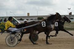 1 and 2 fighting for 1st and 2nd (3/3) (PChamaeleoMH) Tags: horses people racing judges trotting sanlluis hipodrommunicipaldemao van umpire