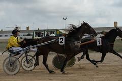 1 and 2 fighting for 1st and 2nd (2/3) (PChamaeleoMH) Tags: horses people racing judges umpire trotting sanlluis hipodrommunicipaldemao van