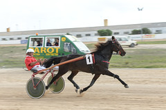 No. 1 (PChamaeleoMH) Tags: horses people racing judges umpire trotting sanlluis hipodrommunicipaldemao van