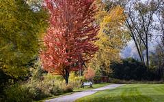 Fall Color in the Park (mahar15) Tags: autumnfoliage autumn october fallcolors landscape winonaminnesota nature outdoors foliage autumncolor fall trees minnesota
