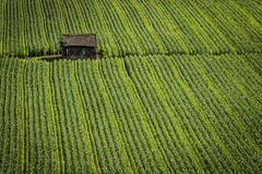 Corn Shack (DeniseKImages) Tags: green rows corn cornrows shack patterns landscape greenlines lines farming farm