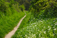 Spring Tour (Spotmatix) Tags: 55210mm belgium brabantwallon camera countryside flowers landscape lens nature nex6 places seasons sony spring villerslaville zoomtele