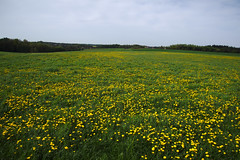Spring Tour (Spotmatix) Tags: 16300mm a68 belgium brabantwallon camera countryside flowers landscape lens nature places seasons sony spring tamron villerslaville zoomtravel
