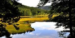 Tourbière de Lispach Vosges (Nathery Reflets) Tags: lac tourbière eau forêt arbres labresse vosges lacdelispach valléeducajoux massifdesvosges nature paysage grandest automne