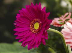Flowers (ost_jean) Tags: flowers fleurs bloemen ostjean nikon d5300 tamron sp 90mm f28 di vc usd macro 1 floraliabrussels