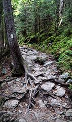 Appalachian Trail near Newfound Gap- Smoky Mountains Fuji xt10 18-55mm (ToddGraves2) Tags: