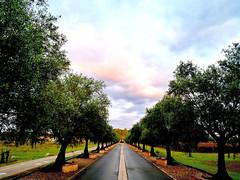 Laffite domain tree allee (ti_ben) Tags: laffite domain wine vin tree allee allée arbes arbre trees nuage nuages clouds cloud