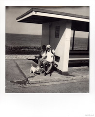 Seaside Holiday (Roj) Tags: shelter instantphotography sourcerojsmithtumblrcom people mono northshore film sea originalphotographers sx70 analogue beach summer streetphotography filmisnotdead analog dog squareframe makerealphotos polaroid impossibleproject photographersontumblr seaside bw blackandwhite monochrome