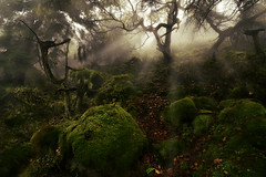 Weird Witchy Roaches (PentlandPirate of the North) Tags: theroaches sevonia staffordshire fog mist trees witches halloween moss forest woodland