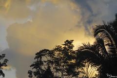 Rainforest (Kusi Seminario) Tags: clouds sunset nubes palm palmera backlight rainforest selva jungle amazon amazonia amazonas nature outdors canon tambopata madrededios peru perú southamerica sudamerica travel 7dmarkii 100400