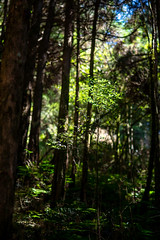 (蔡藍迪) Tags: 35mm ed 18g d610 nikon taiwan chiayi alishan mtali mountain 阿里山 大塔山 大塔山步道 台灣 嘉義 小百岳
