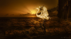 l'ascension... (JDS Fine Art Photography) Tags: bird egret ascension flight wings spreadwings sunset beach ocean sea pier dramatic cinematic inspirational spiritual nature naturesbeauty naturalbeauty beauty