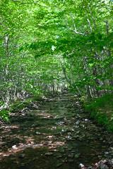 Stream in the woods (leehobbi) Tags: canada cape breton nova scotia woods landscape stream river green foliage explored