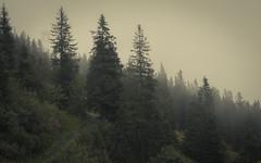 Diagonal (Netsrak) Tags: alpen baum bäume europa kleinwalsertal landschaft natur nebel schnee wald fog mist trees tree alps