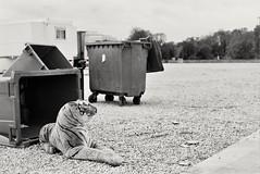 (CroytaqueCie) Tags: olympusom1n adoxsilvermax100 adox silvermax tigre tiger kaplan tiikeri เสือโคร่ง बाघ 虎 tygr ببر טיגריס トラ 호랑이 ვეფხვი tijger lâuhū pantheratigris abandoned peluche fêteforaine stuffedtoy 毛绒玩具 봉제완구 ぬいぐるみ בובהממולאת plyšák لعبةمحشوة knuffelbeest