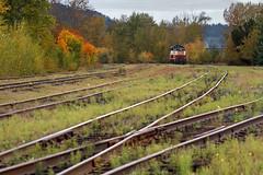 St. Maries yard (Moffat Road) Tags: stmariesriverrailroad stma emd sw1200 501 yard weeds rail track stmaries idaho locomotive railroad railroadyard id