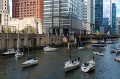 Sailboats on the Chicago River (Cragin Spring) Tags: city chicago chicagoillinois illinois river bridge madisonstreetbridge chicagoriver chicagoil urban unitedstates usa unitedstatesofamerica downtown downtownchicago madisonstreet building boat sailboat
