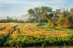 Fall Morning - Central Minnesota (j-rye) Tags: fall ilce7rm2 landscape a7rm2 clouds crops fog morningsun sony sonyalpha tamron2875 trees