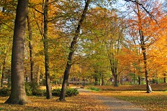 Autumn in the park :) (green_lover (your COMMENTS are welcome!)) Tags: park autumn fall żyrardów poland hometown trees seasons colours nature friendlychallenges thechallengefactory
