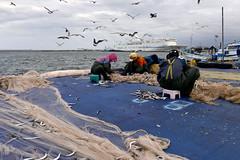 Fishermen (MelindaChan ^..^) Tags: sokcho skorea 韓國 束草 fishermen people life chanmelmel mel melinda melindachan net fish