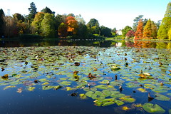 Sheffield Park and Garden Sussex (Adam Swaine) Tags: sheffieldpark naturelovers nationaltrust waterside autumn autumncolours reflections england english seasons trees sussex sussexgardens britain british tree adamswaine 2019 uk ukcounties lakes