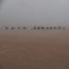 A Karavane in the Haze (paaddor) Tags: camels marocco maroc sand desert karavane sandstorm