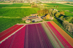 Typical front yard in Holland. (Alex-de-Haas) Tags: dji dutch europa europe fc6310 holland nederland nederlands netherlands noordholland p4p phantom phantom4 phantom4pro westfrisia westfriesland aerial aerialphotography agriculture akkerbouw beautiful beauty bloemen bloemenvelden boerenland bollenvelden bulbfields farmland farming flowerfields flowers landbouw landscape landscapephotography landschaft landschap landschapsfotografie lente lucht luchtfotografie mooi polder pracht quadcopter schoonheid skies sky spring sundown sunset tulip tulips tulp tulpen zonsondergang warmenhuizen northholland