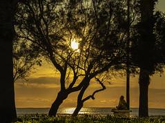 La calma (*Nenuco) Tags: malvarrosa mar sea girl mujer woman sol sun árbol tree playa beach jesúsmr nikon d5300 18105 nikkor