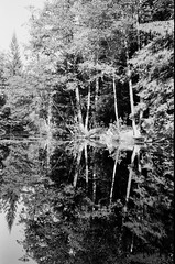 Like in a mirror (Rest on the shore of the pond) (chumaroza_planet) Tags: film filmnotdead filmphotography rolleirpx400 rollei rpx 400 zorki6 industar50 analog monochrome bw nature landscape reflection пленка плёнка чб монохром аналог пейзаж парк сергиевка санктпетербург петербург зоркий6 индустар50 природа