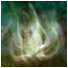 ICM Branch , Findatie (wwshack) Tags: icm intentionalcameramovement kinross lochleven lochlevenheritagetrail scotland treeabstracts trees