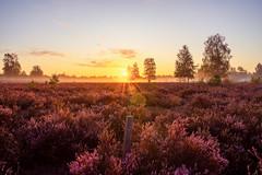 Reicherskreuzer Heide (Matthias Hertwig) Tags: matthias hertwig reicherskreuzer heide sonnenaufgang brandenburg deutschland natur landschaft nebel sony a7ii
