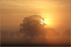 Ein goldiges Wochenende für Alle ! (der bischheimer) Tags: sonnenaufgang sunrise dunst morgennebel morgens sachsen saxonie derbischheimer
